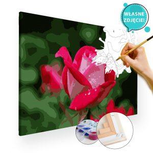 malowanie po numerach kwiaty z własnego zdjęcia róża